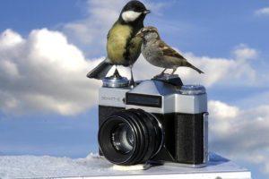Szkolny konkurs fotograficzny 4-6