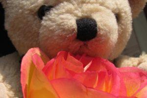 Pluszowy jasnobrązowy miś z czerwoną różą